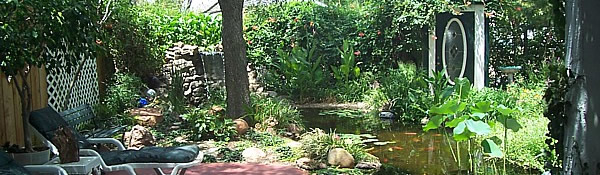 garden patio with fish ponds and flowers
